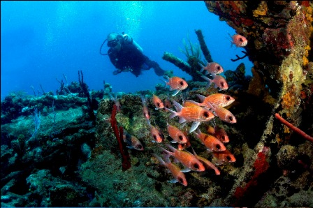 scuba dive in St. Thomas US Virgin Islands